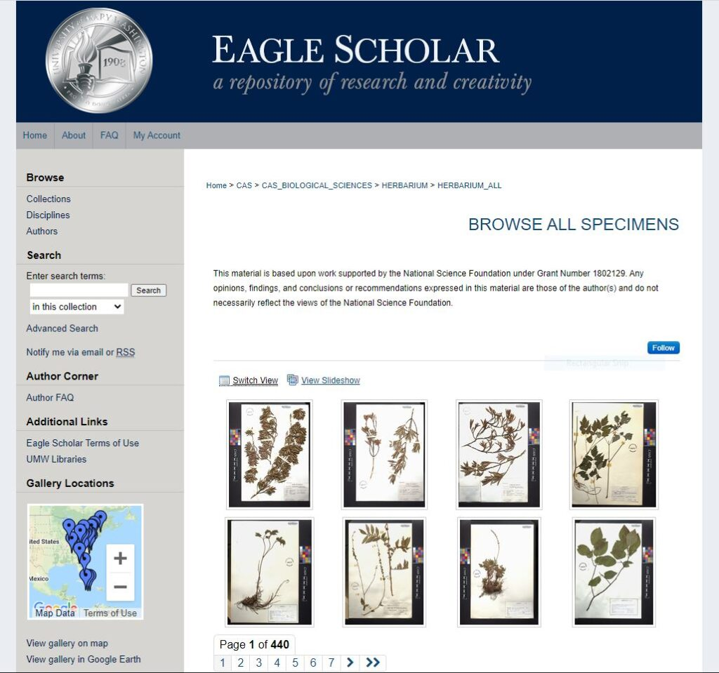 Screenshot of the eight scanned herbarium specimens in the Herbarium Collection in Eagle Scholar.